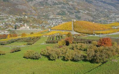 Vini della Valle d'Aosta simbolo della viticoltura eroica
